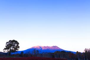 木曽馬の里,コナラの一本木と朝焼けの御嶽山の写真素材 [FYI03224702]
