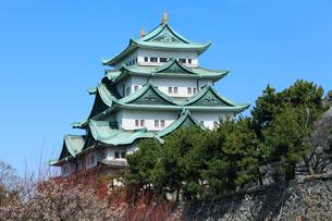 名古屋城天守閣とウメの写真素材 [FYI03224709]