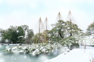冬の北陸金沢兼六園,唐崎松と降る雪の写真素材 [FYI03224720]