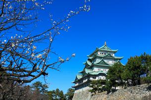 名古屋城天守閣とウメの写真素材 [FYI03224727]