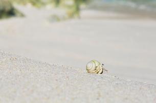 渚のオカヤドカリの写真素材 [FYI03224812]