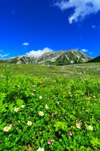 夏の立山・高山植物の花咲く室堂平より雄山などの山々の写真素材 [FYI03224873]