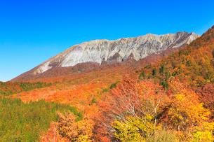 秋の鍵掛峠より快晴の空に大山と紅葉の写真素材 [FYI03224878]