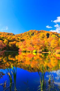 秋の鎌池に映る紅葉の木立の写真素材 [FYI03224884]