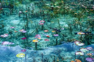 モネの池に浮かぶ蓮の葉と泳ぐ鯉の写真素材 [FYI03224894]