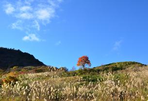 茶臼山高原 紅葉の写真素材 [FYI03225052]