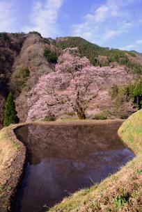 駒つなぎの桜、2018の写真素材 [FYI03225108]