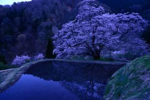 駒つなぎの桜、2018の写真素材 [FYI03225110]