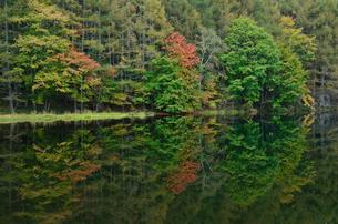 御射鹿池の紅葉、2014秋の写真素材 [FYI03225169]