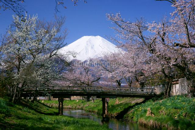 富士山と桜と小川の写真素材 [FYI03225377]