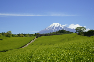 茶畑と富士山と青空と雲の写真素材 [FYI03225380]