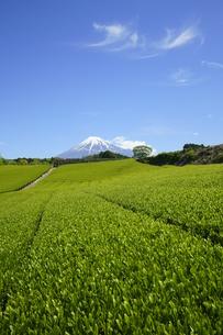 茶畑と富士山と青空と雲の写真素材 [FYI03225381]