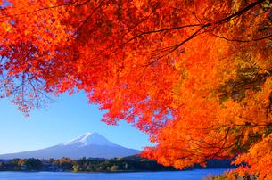 紅葉と富士山と河口湖の写真素材 [FYI03225391]