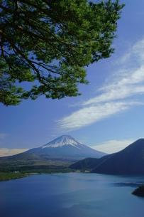 富士山と松と本栖湖の写真素材 [FYI03225412]