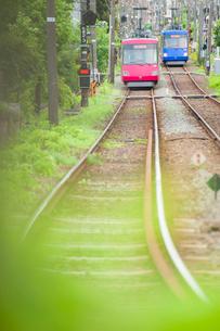 緑の中を行き交う東急世田谷線の写真素材 [FYI03225493]