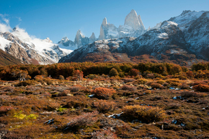 紅葉のチャルテン付近から望む、パタゴニアのフィッツロイ峰の写真素材 [FYI03225552]