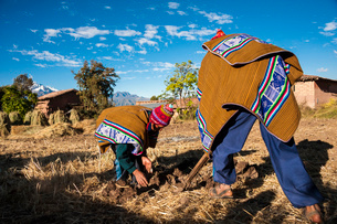ペルー・ウルバンバのケチュア族の耕作風景の写真素材 [FYI03225644]
