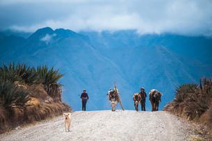 ペルー・ウルバンバ谷の農村の暮らしの写真素材 [FYI03225650]
