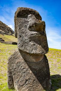 石切り場・ラノララクのモアイの写真素材 [FYI03225984]