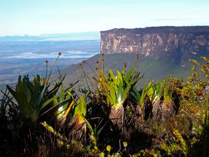 ギアナ高地ロライマの植物とクケナン山の写真素材 [FYI03226488]
