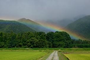 虹とあぜ道の写真素材 [FYI03226522]