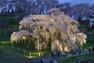 三春の滝桜、夜桜の写真素材 [FYI03226544]