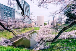 九段下 牛ヶ縁の桜の写真素材 [FYI03226636]