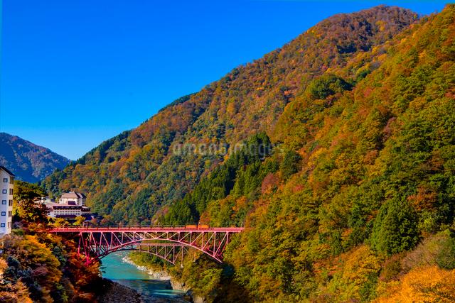 黒部峡谷の紅葉とトロッコ電車を望むの写真素材 [FYI03226658]