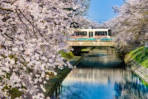 松川と路面電車と桜の写真素材 [FYI03226661]