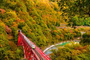 黒部峡谷の紅葉とトロッコ電車の写真素材 [FYI03226662]
