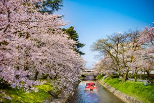 春の松川に浮かぶ遊覧船と橋の上を走る路面電車の写真素材 [FYI03226665]