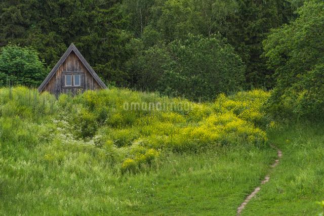 緑の中に建つ一軒家の写真素材 [FYI03226699]