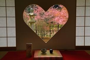 京都 正寿院の桜の写真素材 [FYI03226777]