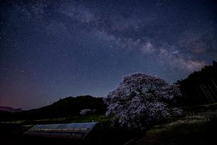 黒部のエドヒガン桜、星景の写真素材 [FYI03226830]