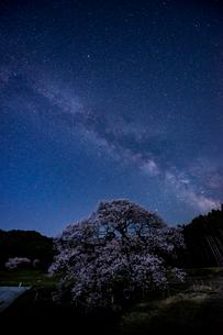 黒部のエドヒガン桜、星景の写真素材 [FYI03226832]