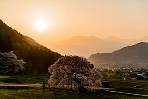 黒部のエドヒガン桜、夕景の写真素材 [FYI03226837]