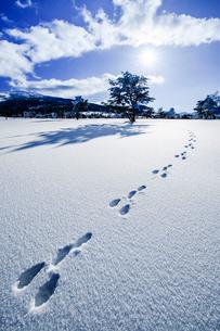朝日差す菅平高原の雪原とウサギの足跡の写真素材 [FYI03226912]
