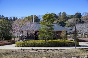 梅の花咲く偕楽園の写真素材 [FYI03226948]