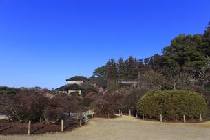 梅の花咲く偕楽園の写真素材 [FYI03227055]