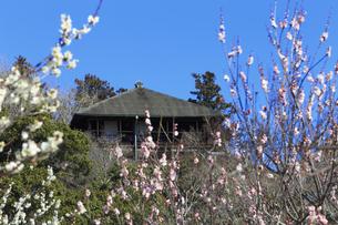 梅の花咲く偕楽園の写真素材 [FYI03227058]