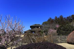 梅の花咲く偕楽園の写真素材 [FYI03227059]