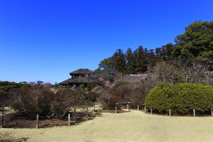梅の花咲く偕楽園の写真素材 [FYI03227061]