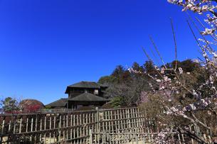 梅の花咲く偕楽園の写真素材 [FYI03227062]