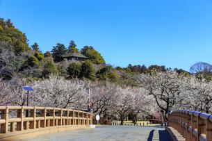 梅の花咲く偕楽園の写真素材 [FYI03227068]