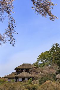 好文亭と左近の桜の写真素材 [FYI03227086]