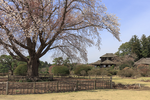 好文亭と左近の桜の写真素材 [FYI03227094]