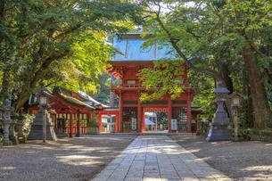 鹿島神宮 楼門の写真素材 [FYI03227240]