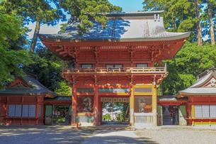 鹿島神宮 楼門の写真素材 [FYI03227243]