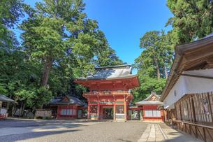 鹿島神宮 楼門の写真素材 [FYI03227252]