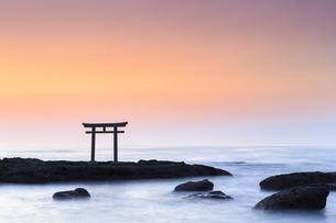 大洗磯前神社神磯の鳥居の写真素材 [FYI03227256]